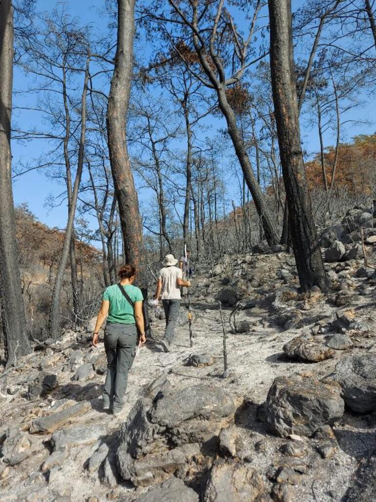 Muğlada yanan özel bölgeler için ekolojik kurtarma operasyonu