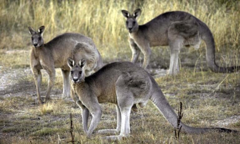 Avustralya aslında yok Bu kez de ülke karşıtlığı komplo teorisi