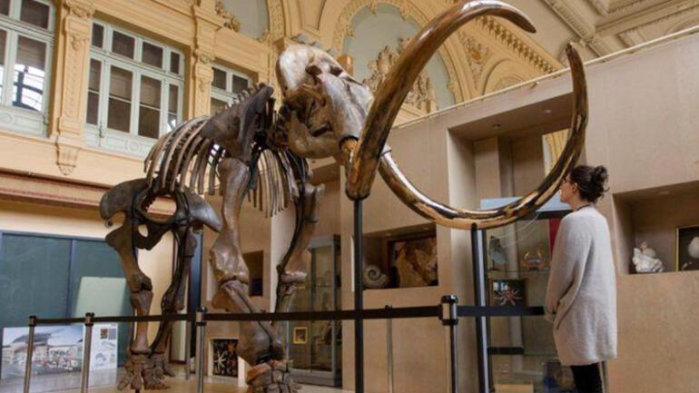 Heyecanlandıran çalışma: Mamutlar geri dönüyor...