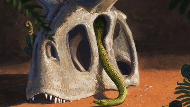 Çarpıcı araştırma ortaya çıkardı: Göktaşları dinozorları yok etti, yılanların kaderi değişti